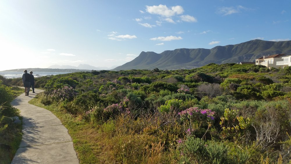 Hermanus coastline, South Africa