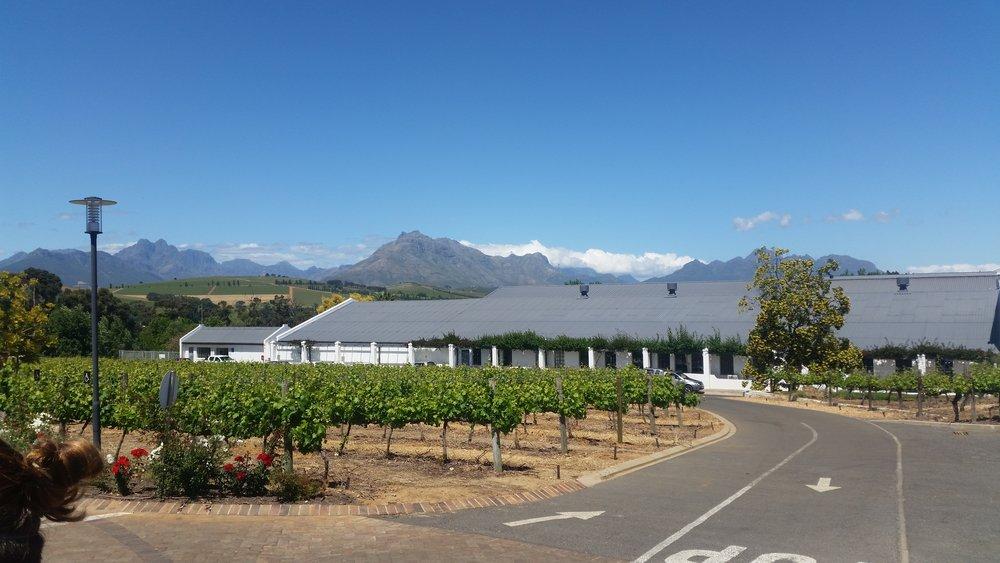 Copy of Stellenbosch vineyards