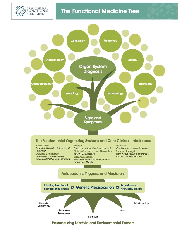 IFM+tree.jpg