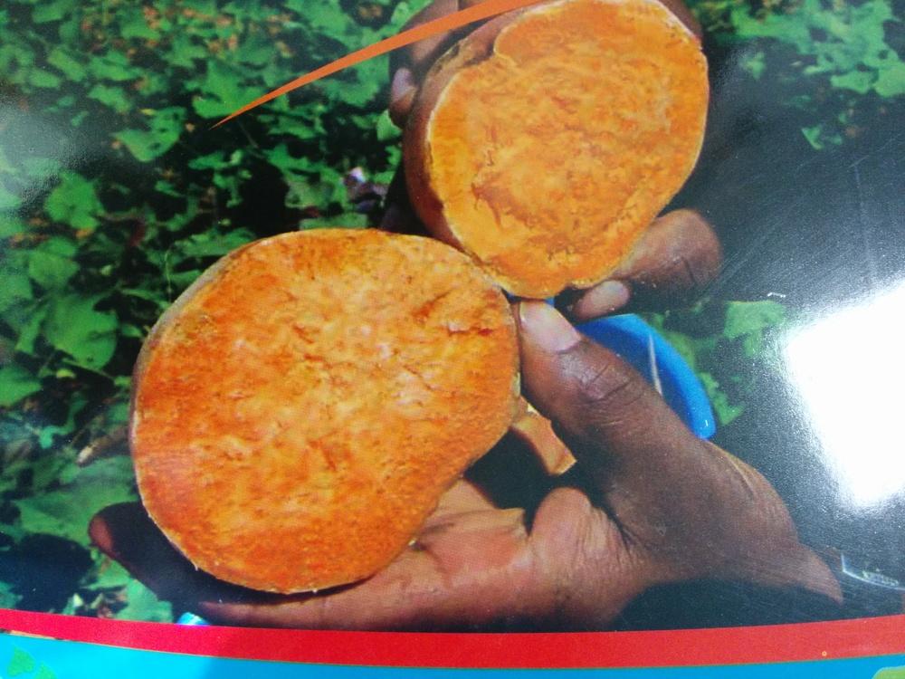 Orange-fleshed sweet potato (OFSP)