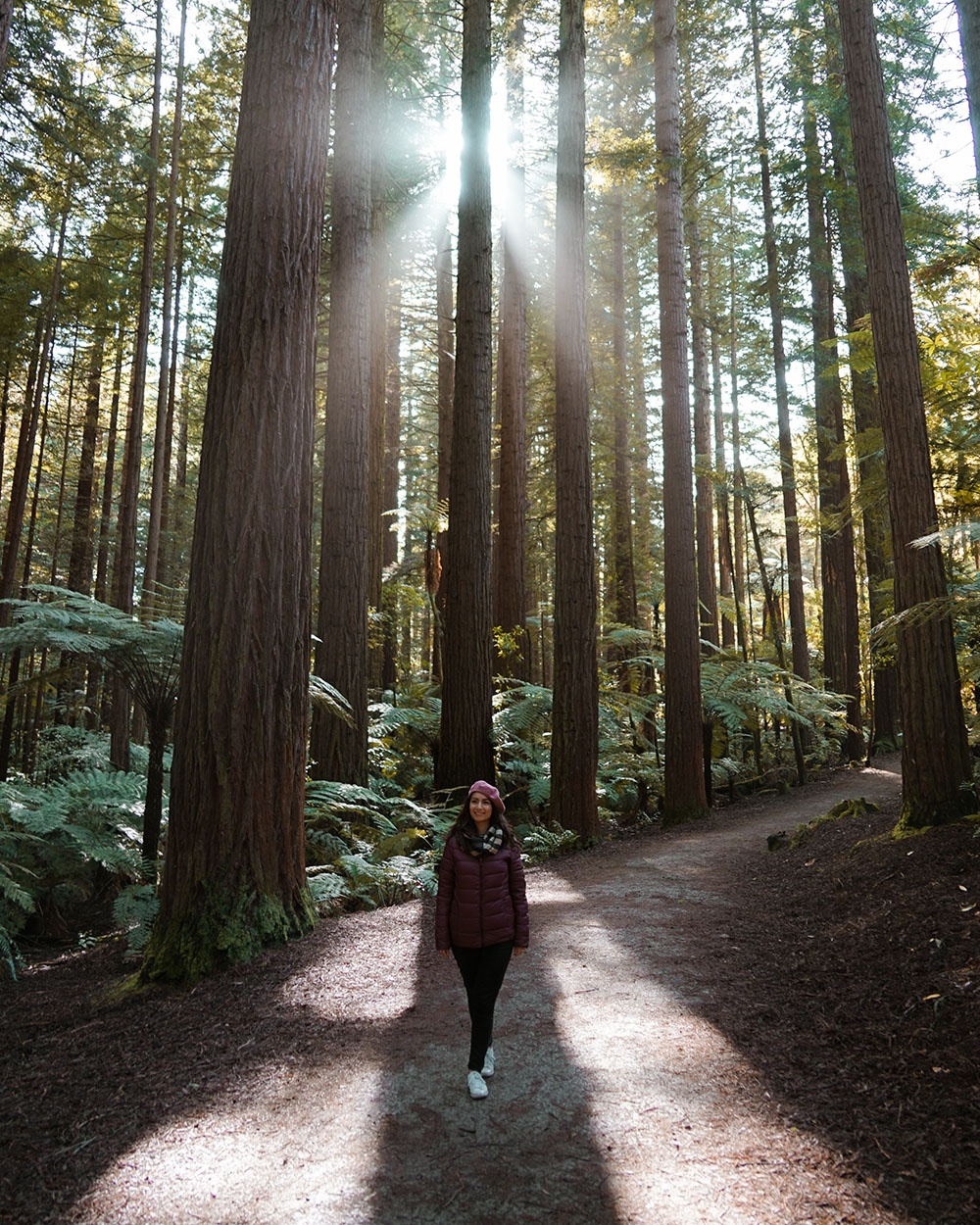 Redwoods, Redwoods Forest, Forest, Rotorua, Californian Redwood