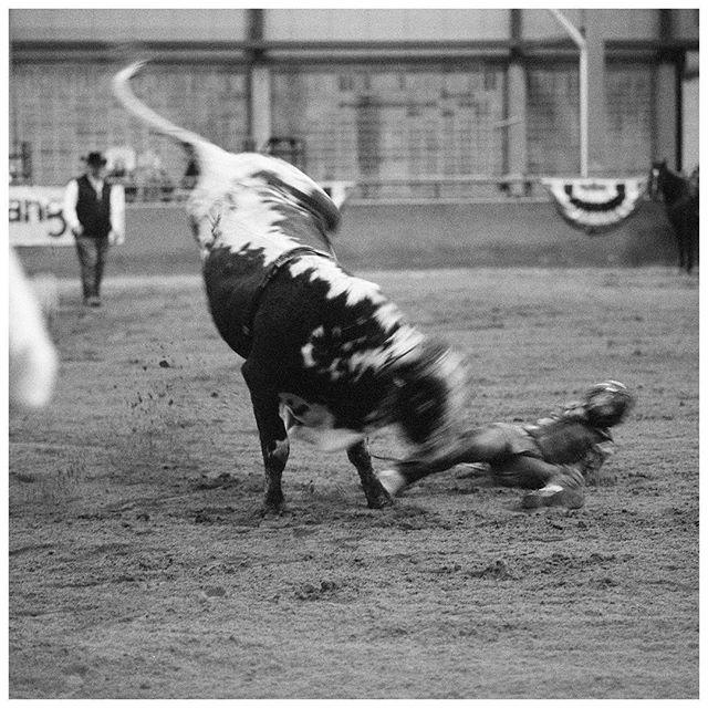 -Roane State Community College Pro Women's Rodeo, January 12, 2019 —————————————— #photography #rodeo #photojournalism #blackandwhite #mono #film #analog #analogphotography #mediumformat #hasselblad #ilfordfilm #ilfordphoto #ilforddelta3200 #bull #bullriding