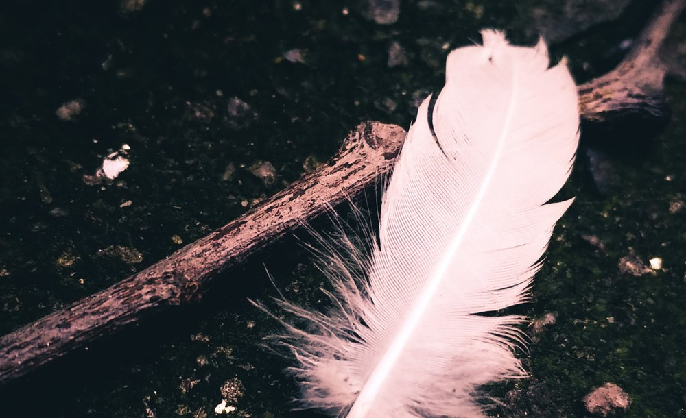 feather3.jpeg