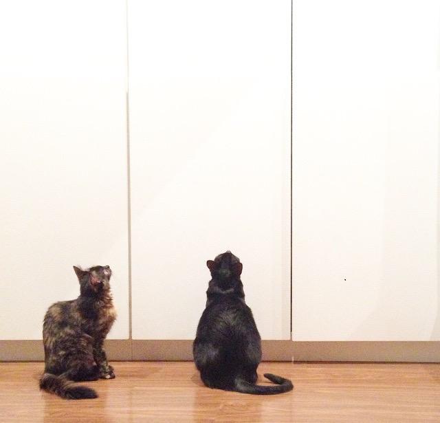 Maya e Dexter de olho em um pernilongo.