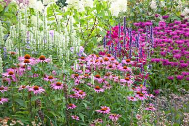 Summer border with Echinacea purpurea, Phlox 'Le Mahdi', Agastache 'Blackadder', Monarda 'Vintage Vine', Sedum 'Veluwse Wakel' and Agastache 'Alabaster'