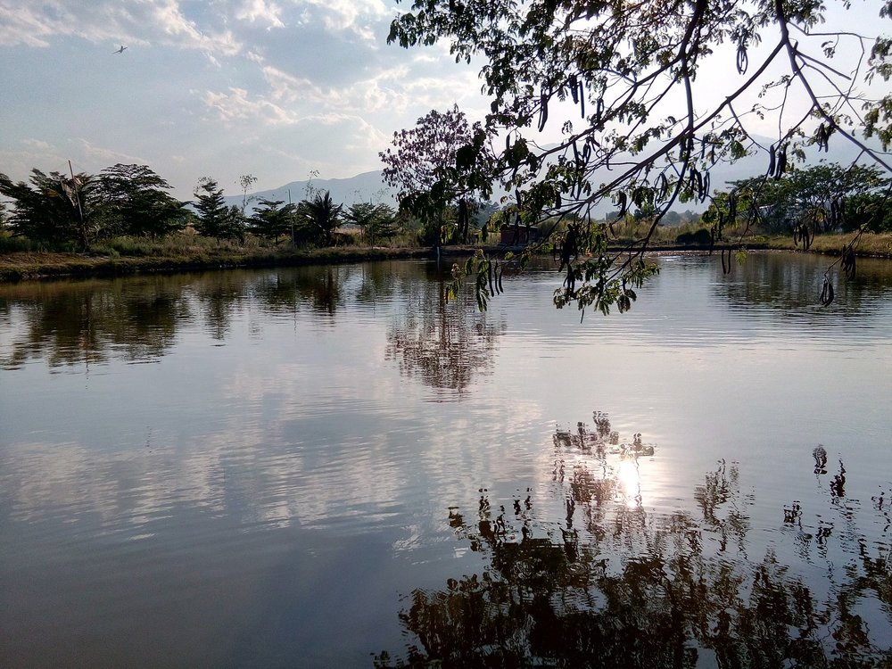 Pond Fertilizers