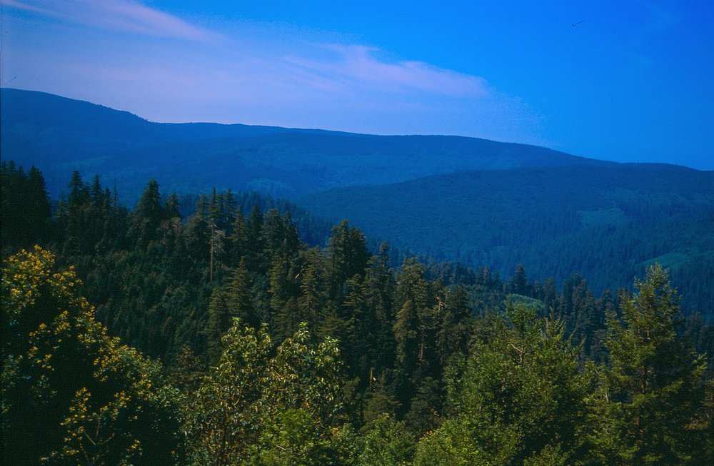 Redwood Creek Overlook.jpg