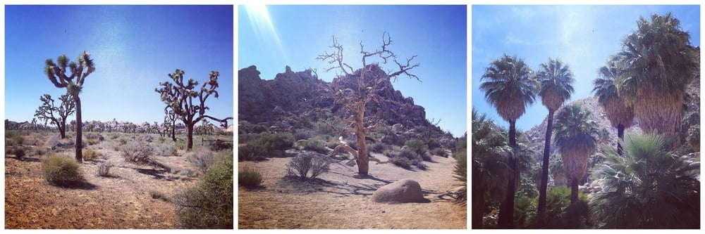Joshua Tree National Park.jpeg