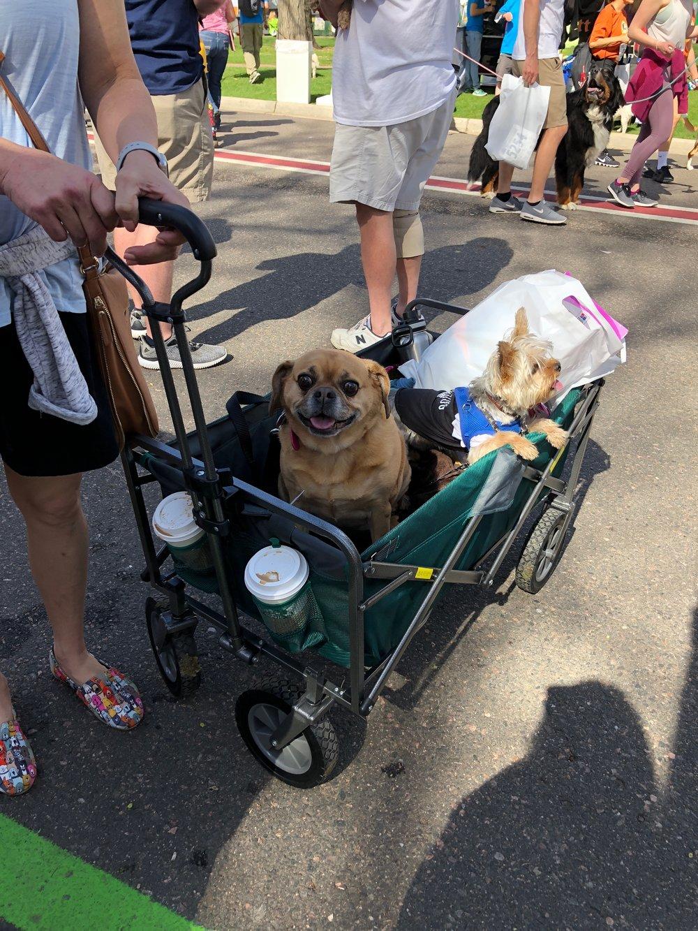 Ute dogs in wagon.JPG