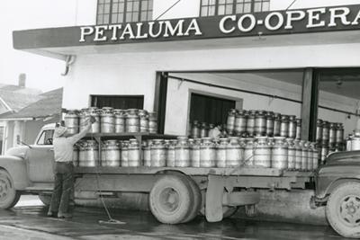 PetalumaCreamery