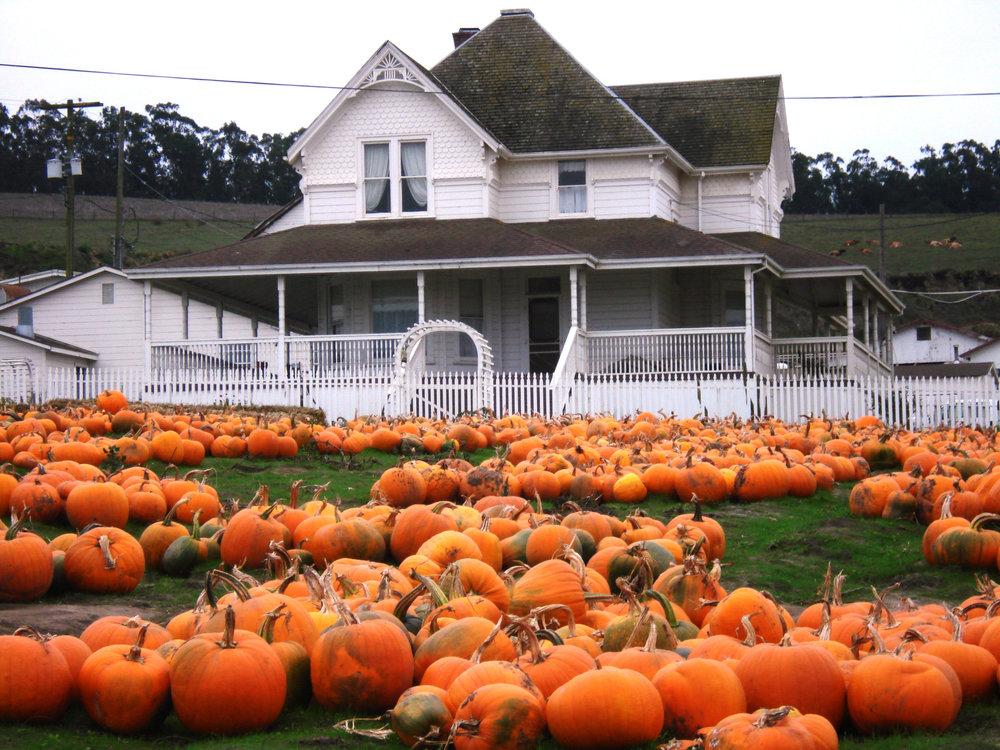 House_Pumpkins.jpg