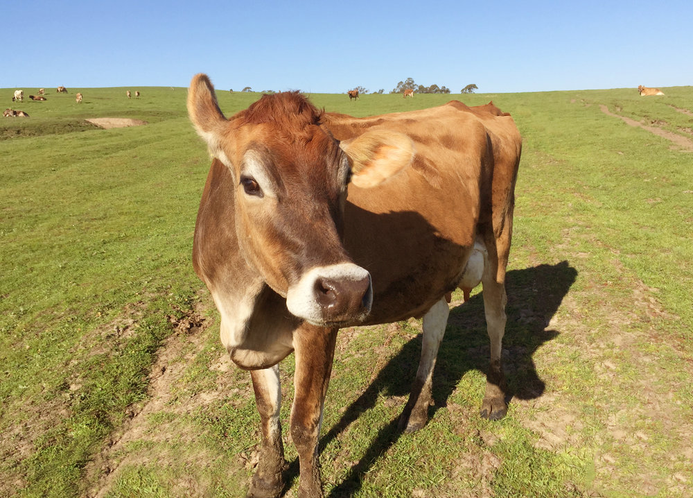 FarmingPagePastureNews.jpg