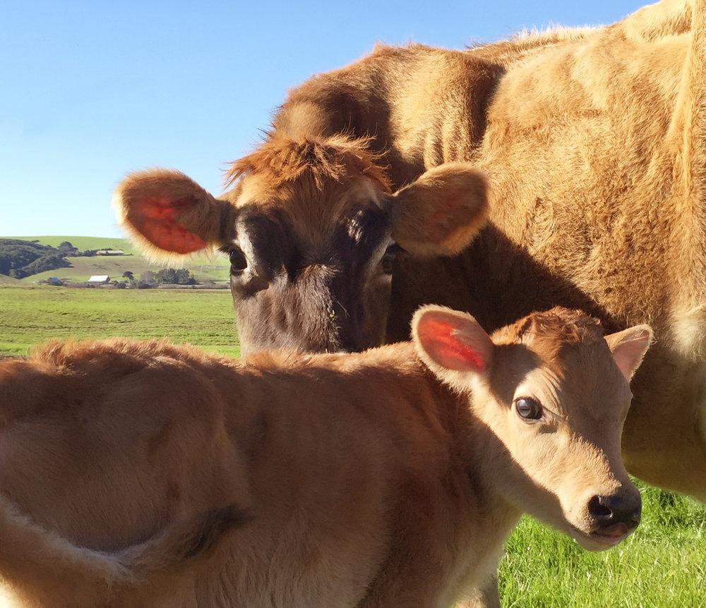 FarmingPageSayCheeseHoney.jpg