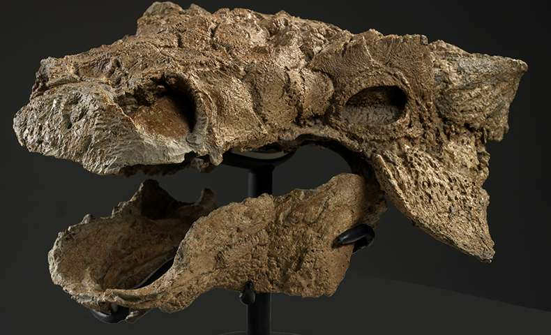 Novo fóssil encontrado!