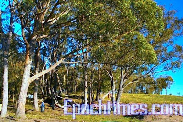 別墅旁邊的大樹。請注意樹上掛的那個東西, 那是孩子坐在上面打鞦韆玩的。