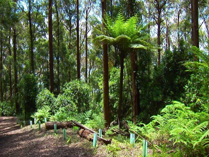 這裡除了高大的喬木、茂盛的灌木之外,還有很多附生植物。