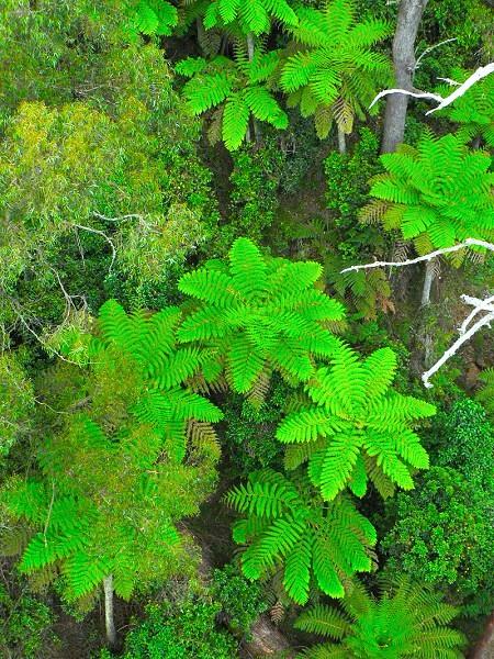 雨林中的幾何圖案。