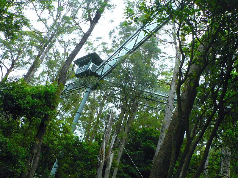 這是在生態游的概念指導下建立的公園。從這個角度看,立柱與樹儼然有「融為一體」之感。