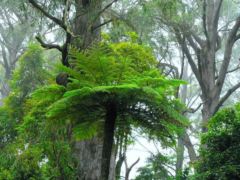 這就是從上面看其樹冠像幾何圖形的那種樹的「本來面目」。