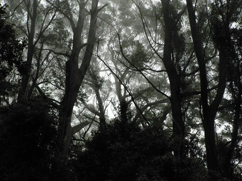 趕上陰雨天,就有這樣的景。