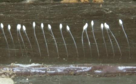 博活地區孟女士家的優曇婆羅花,長在鐵門上(大紀元)