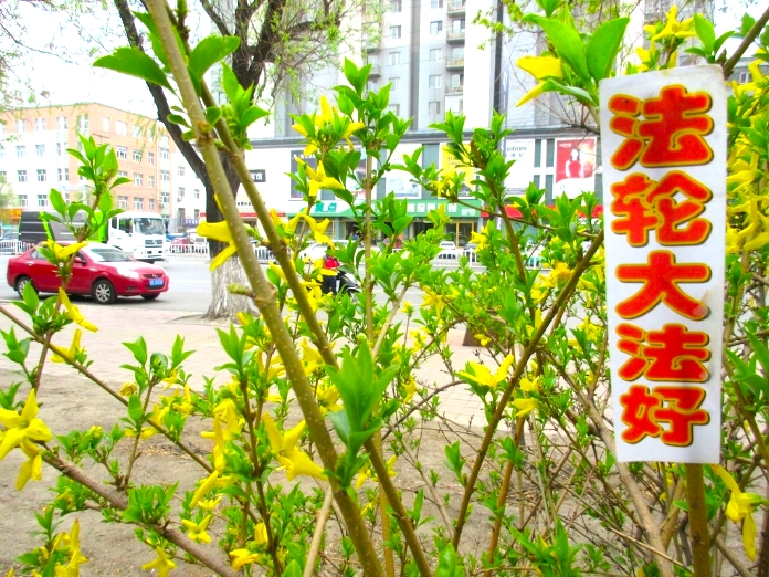 "A Falun Gong banner says ""Falun Dafa is Wonderful"" in China. (Photo credit: en.minghui.org) 中國大陸某城市的「法輪大法好」橫幅(圖片來源:明慧網)"