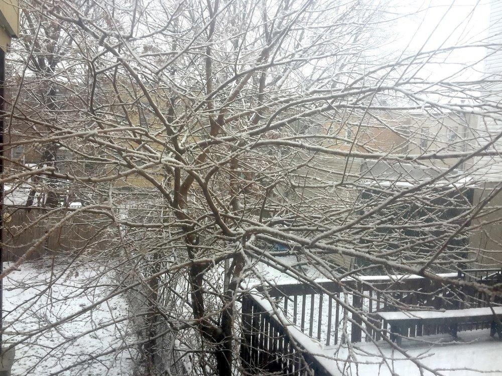 Winter 嚴冬