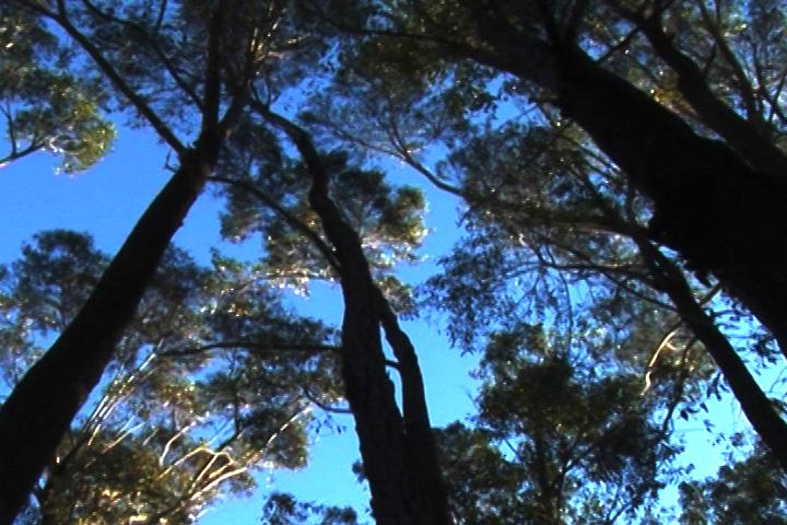Genoa峰頂的密林