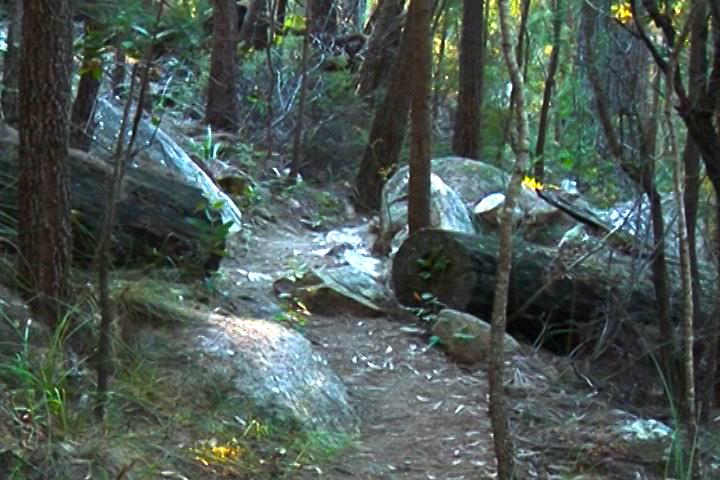 一棵死樹被鋸斷後拉開,讓出小道,同時最大程度保留森林原貌。