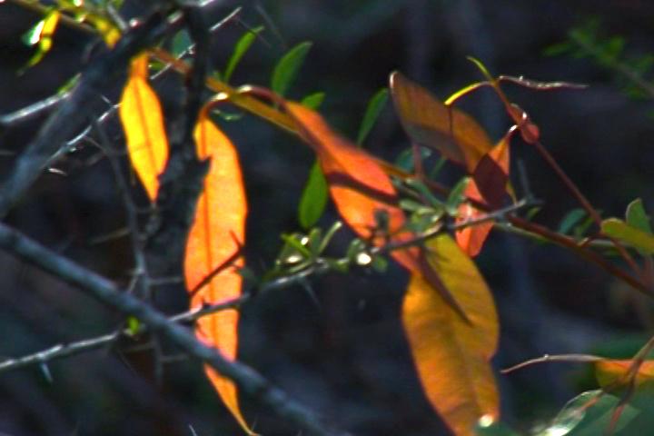 清晨,太陽爬上樹梢後,每一片樹葉都熠熠生光。