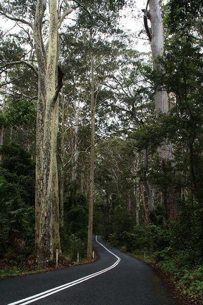 「原生態」林子中的優美曲線
