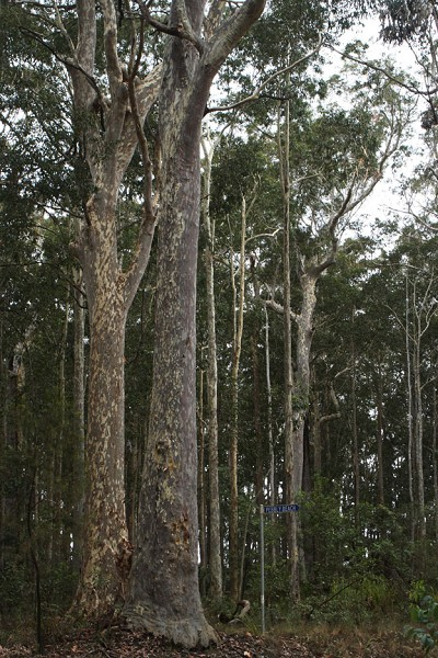 「原生態」林子