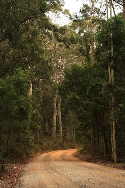 美麗的「原生態」林子