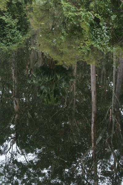 「原生態」林子中的靜謐湖面
