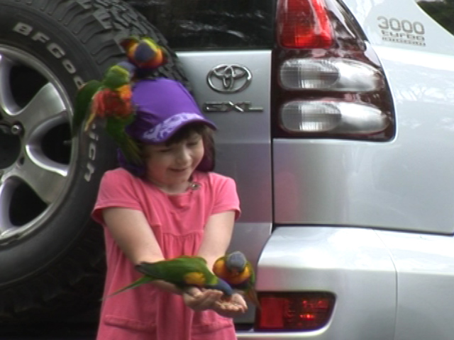 小姑娘玩鸚鵡,又愛又怕。
