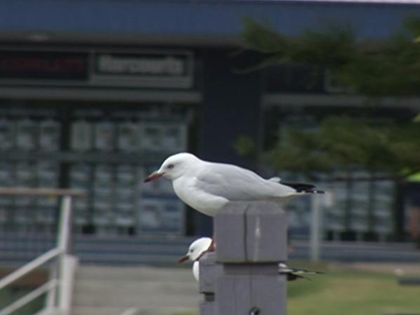 不知名海港邊上的鴿子
