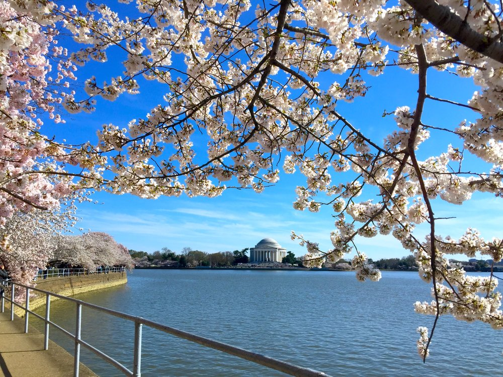 At Thomas Jefferson Memorial, Washington DC, on April 1, 2019年4月1日攝於華盛頓傑佛遜紀念堂。