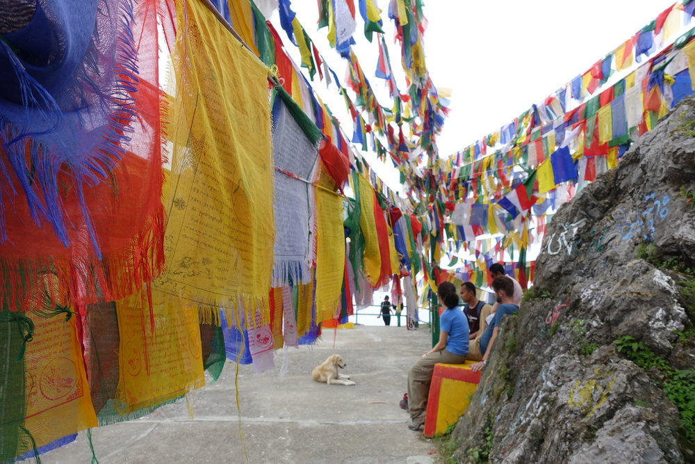 We met this stray dog atop a holy Tibetan Buddhist shrine in Happy Valley.