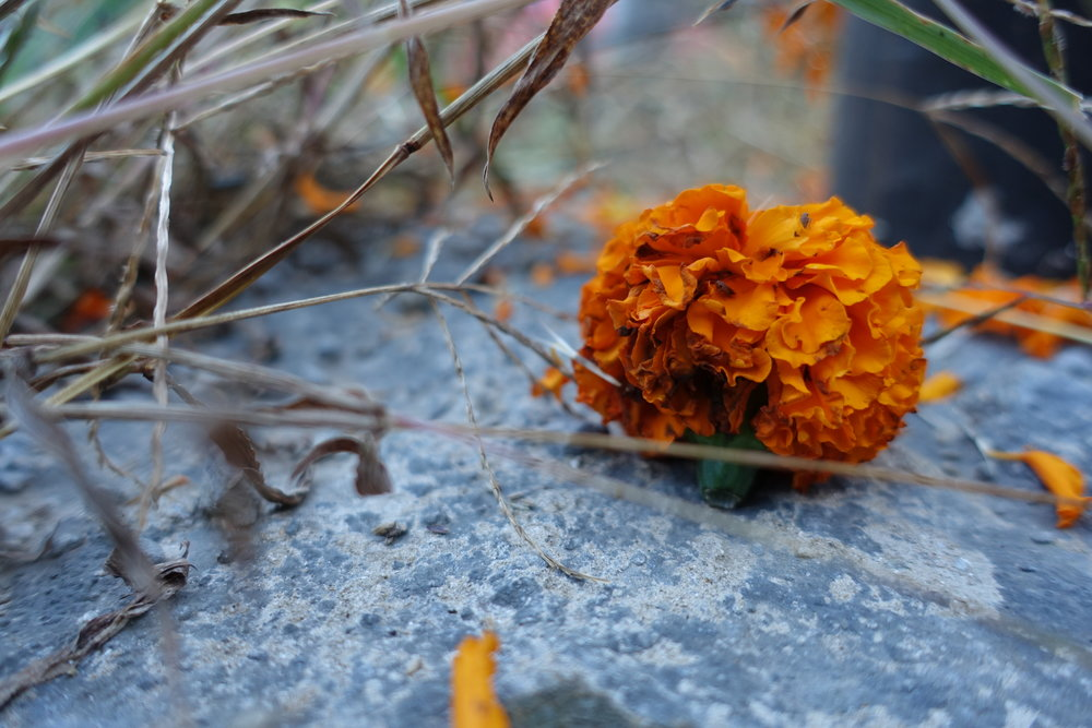 Our guides welcomed us to our camp with marigolds. (pc: Leaf)