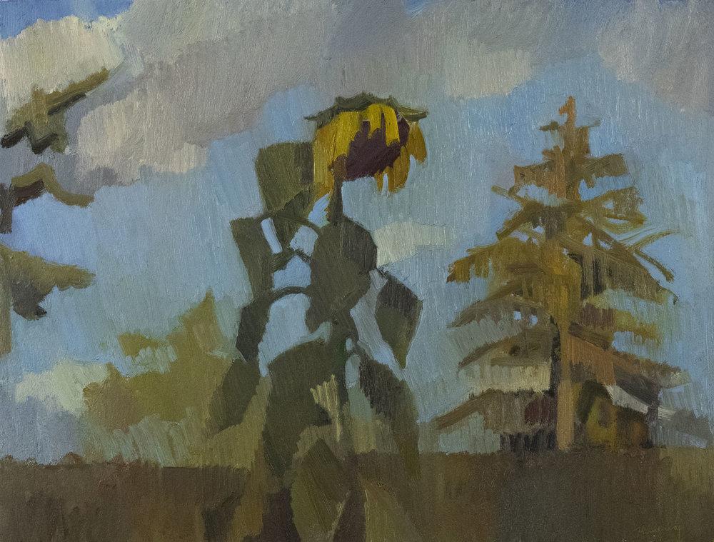 """Sunflower & Hemlock  , Oil on Paper, 12"""" x 16,"""" 2018"""