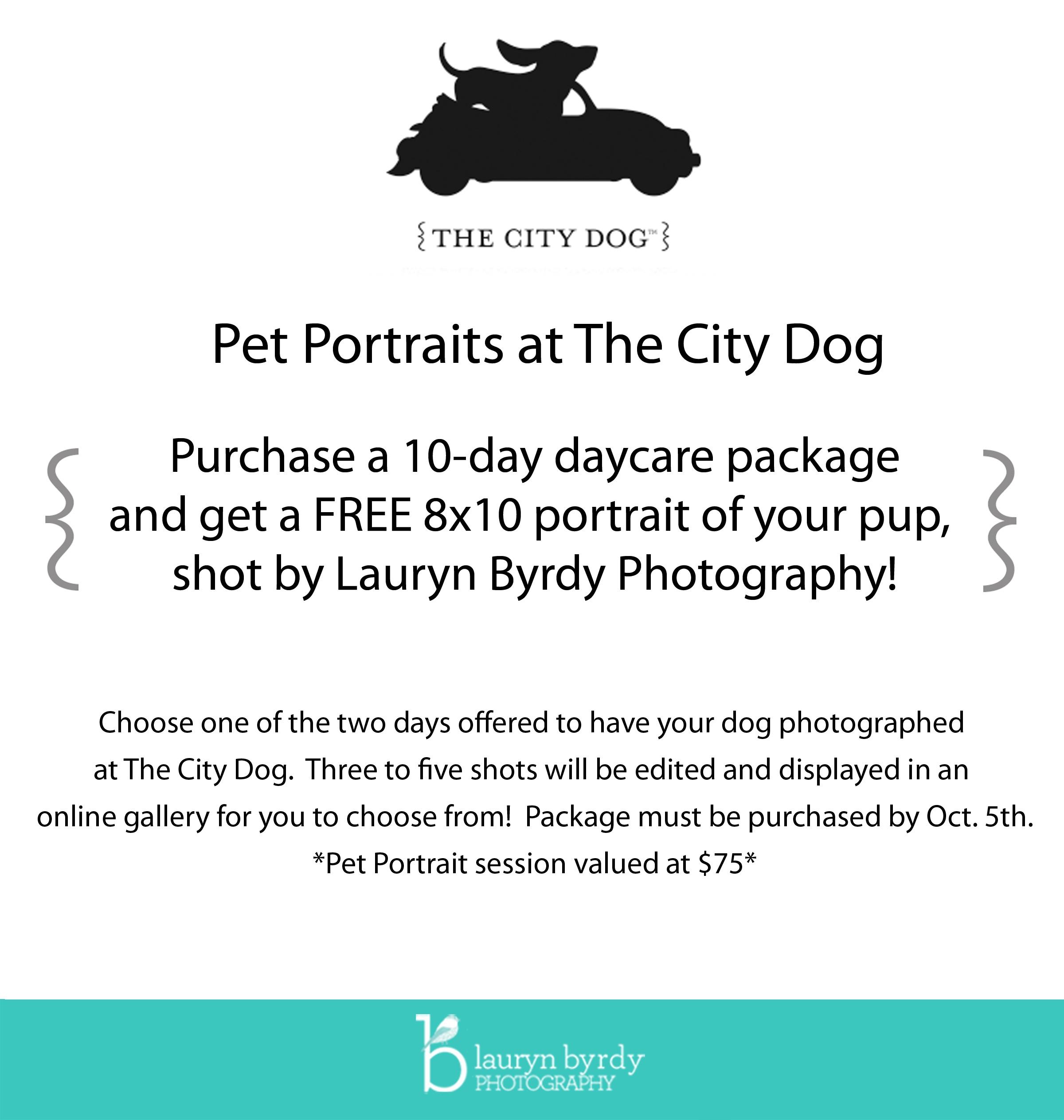 The City Dog_Columbus Ohio_Doggie Daycare Portraits