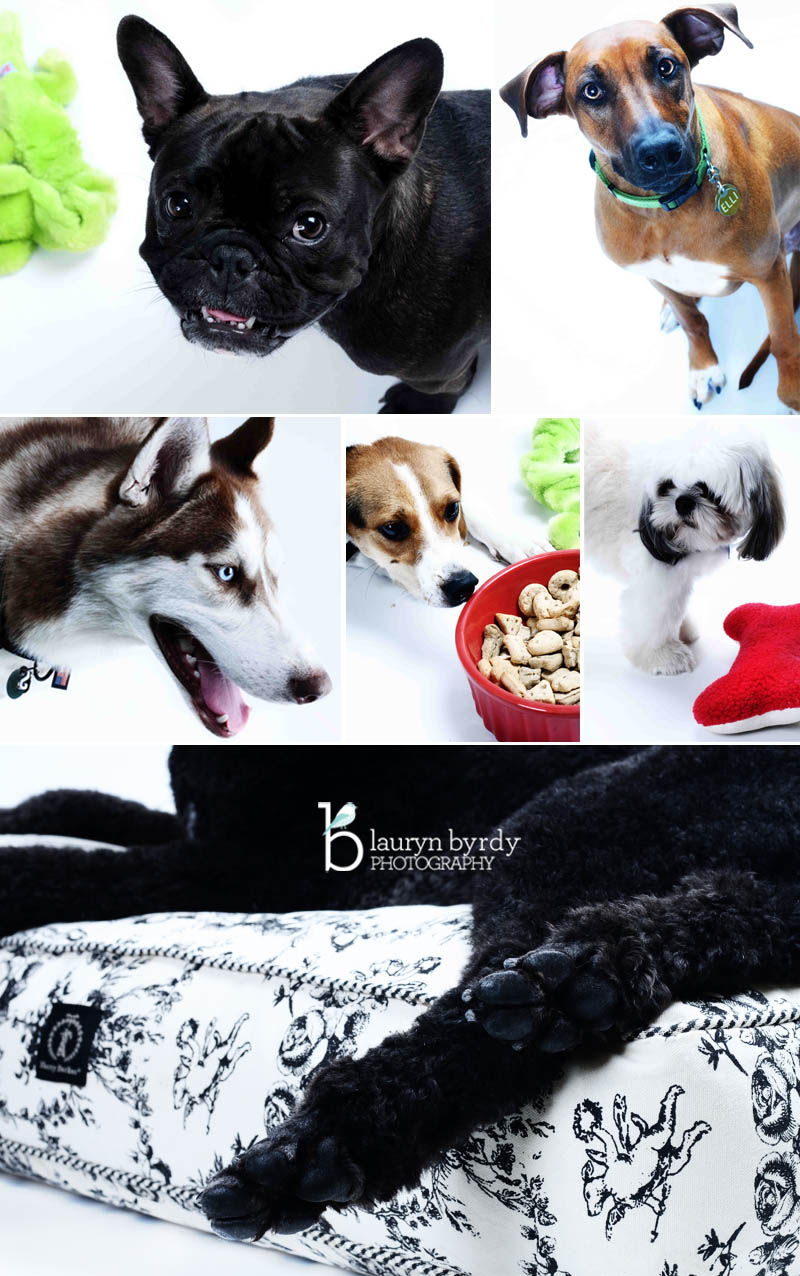 The City Dog Doggie Daycare Columbus Ohio_Columbus Ohio Lifestyle Family Photographer