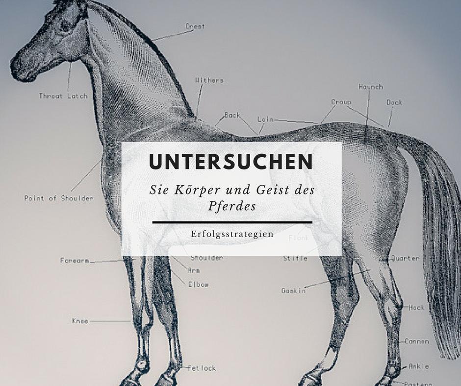 1. - Untersuchen Sie Körper und Geist des Pferdes nach konkreten Problemen und lösen Sie diese.