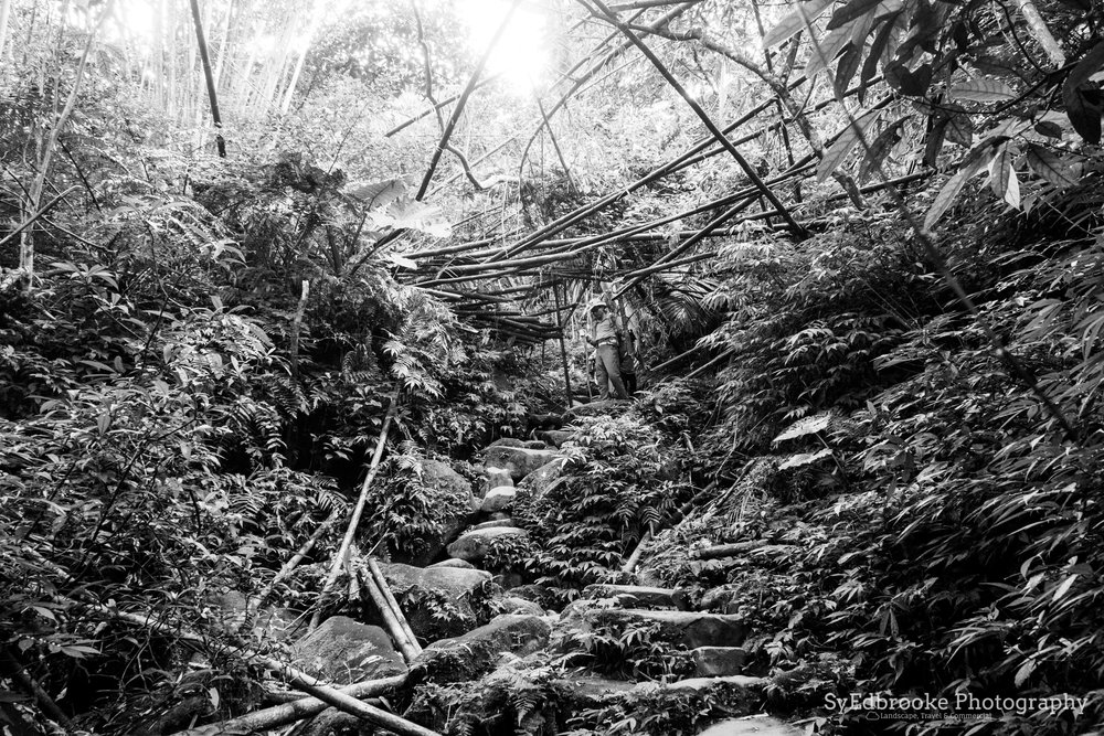 a mass fallen of bamboo logs to clamber under. f4.5. ISO 1600, 1/30, 24mm