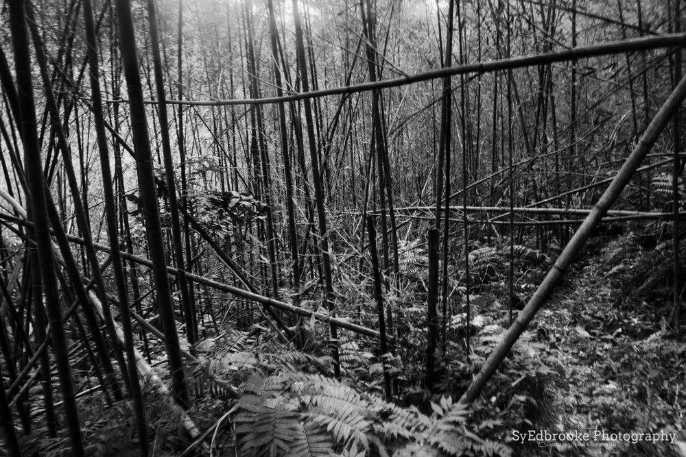 walking sticks galore! f20, ISO 1600, 3.2, 24mm