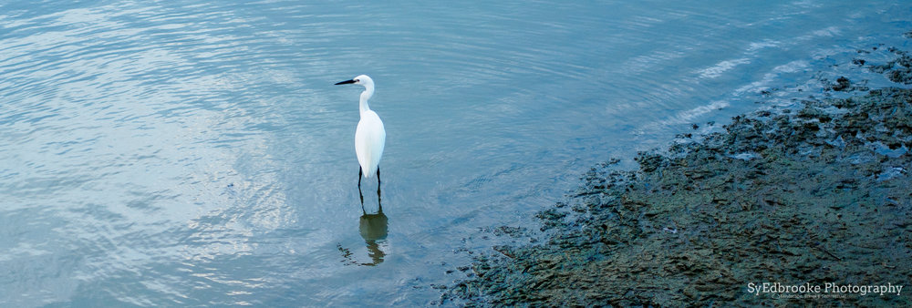 A lone heron going fishing. f1.8, ISO 200, 1/640, 90mm