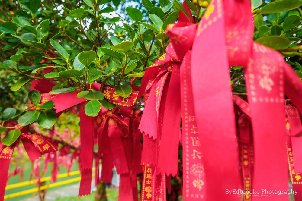 Lucky tree. 24mm, ISO 64, f2.8, 1/80