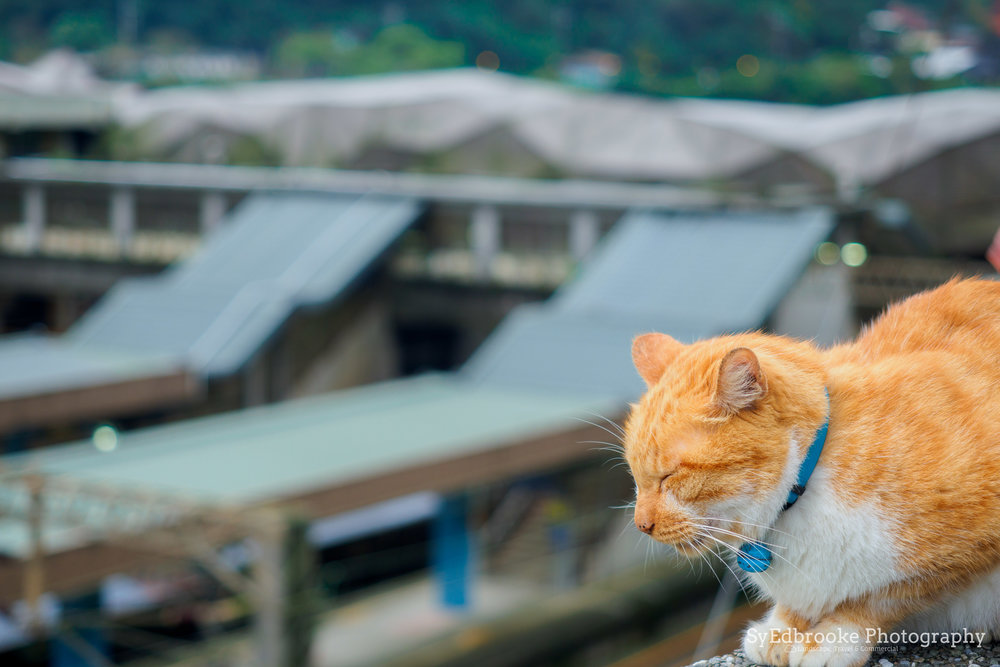 A ginger tabby. 80mm, ISO 64, f.2.8, 1/40