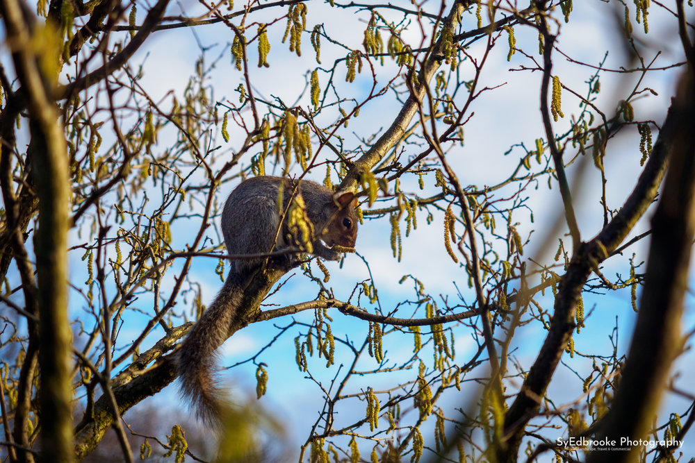 Squirrel! 80mm, ISO 200, f 2.8, 1/1600