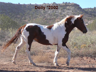 Dolly_0.jpg